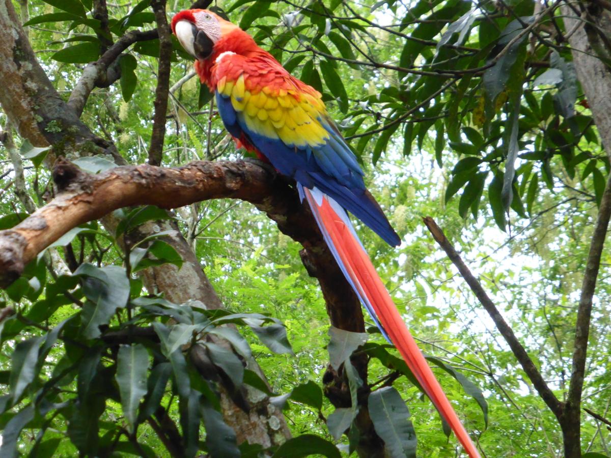 Bright, beautiful macaw!