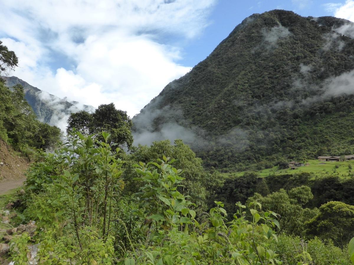 Tropical jungle of the Amazon basin