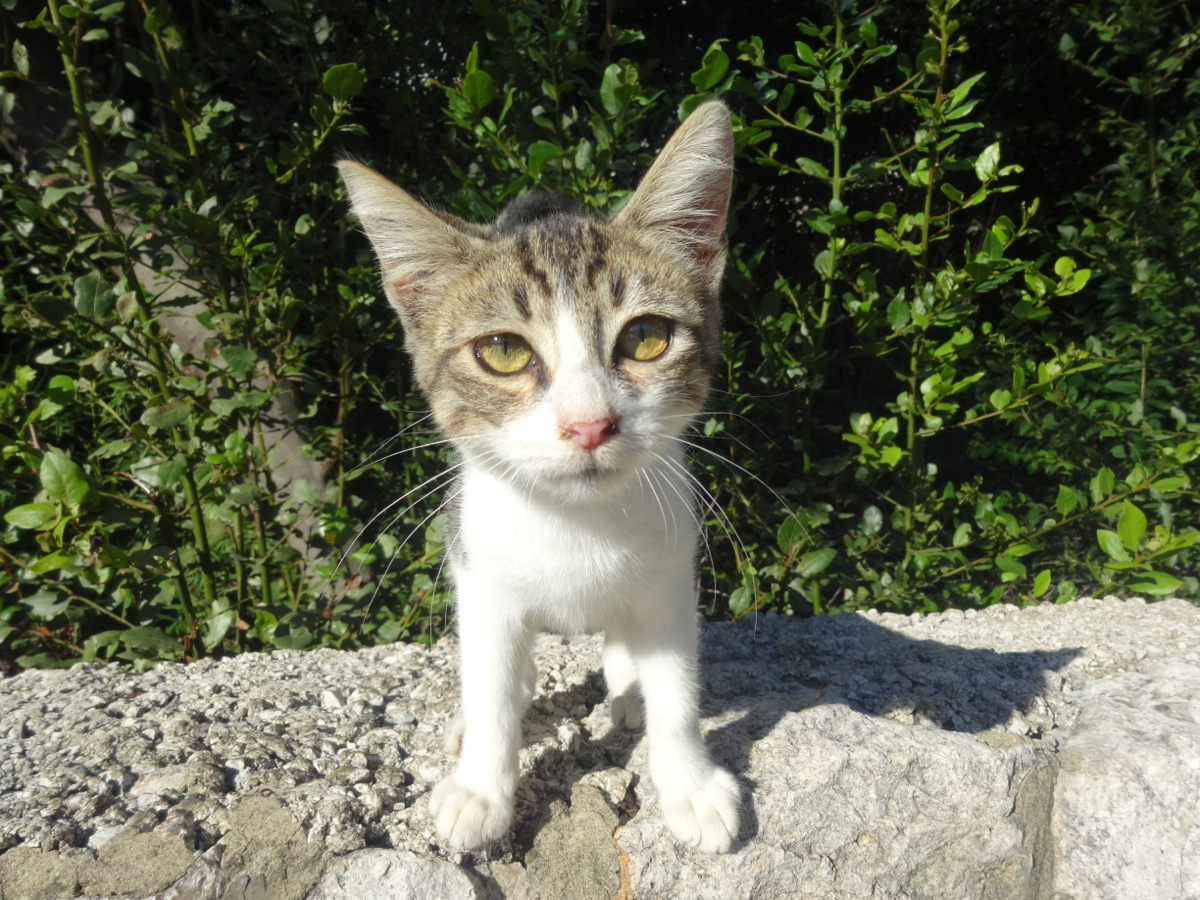 One of the many stray cats we encountered in Dubrovnik - this one was definitely the cutest and most curious!