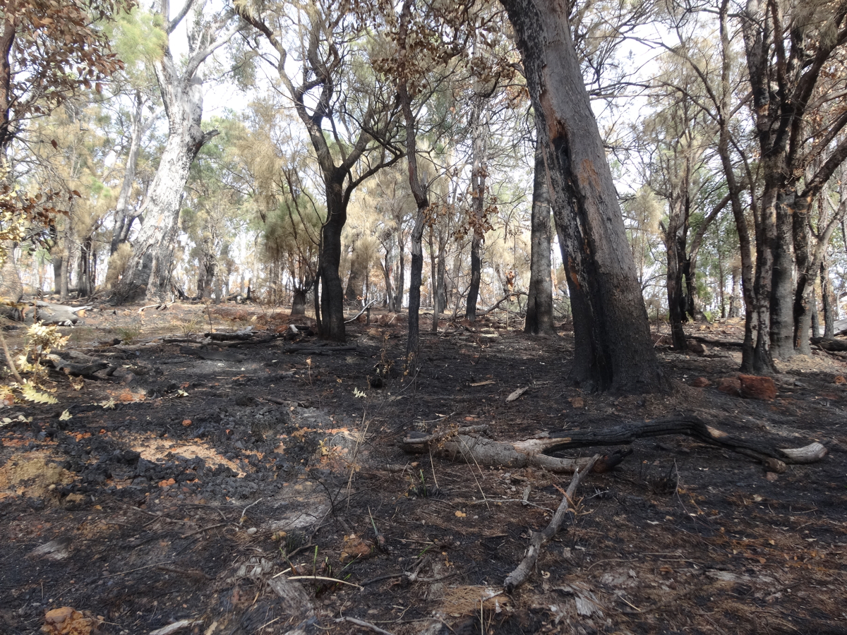 Remnants of a bush fire