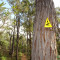 Australia: Bibbulmun Track four-day hike